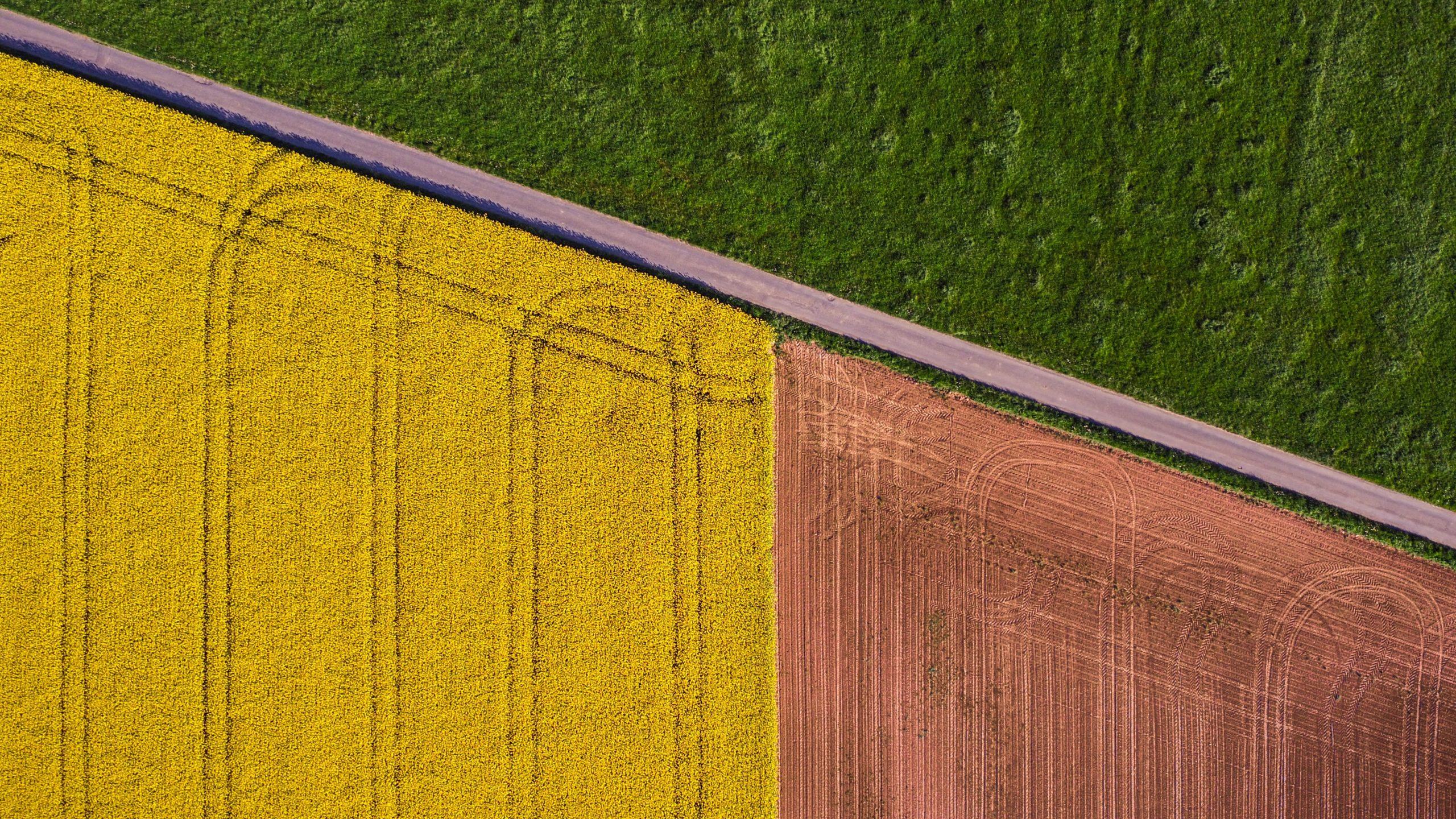 Il ruolo della tecnologia blockchain nella tracciabilità alimentare